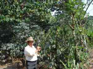 Coffee Cooperative